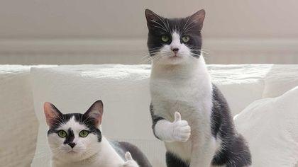 隱藏surprise!神秘的尤里卡時刻,征服喵星之路更進一步!|Brief History of Cat