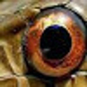 komandan mata u